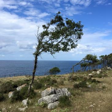 Jakobsweg II – Tag 9 – Pobeña-Castro Urdiales-Islares